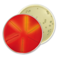 listeria spp. detection, enumeration and confirmation with bioMérieux chromogenic culture media